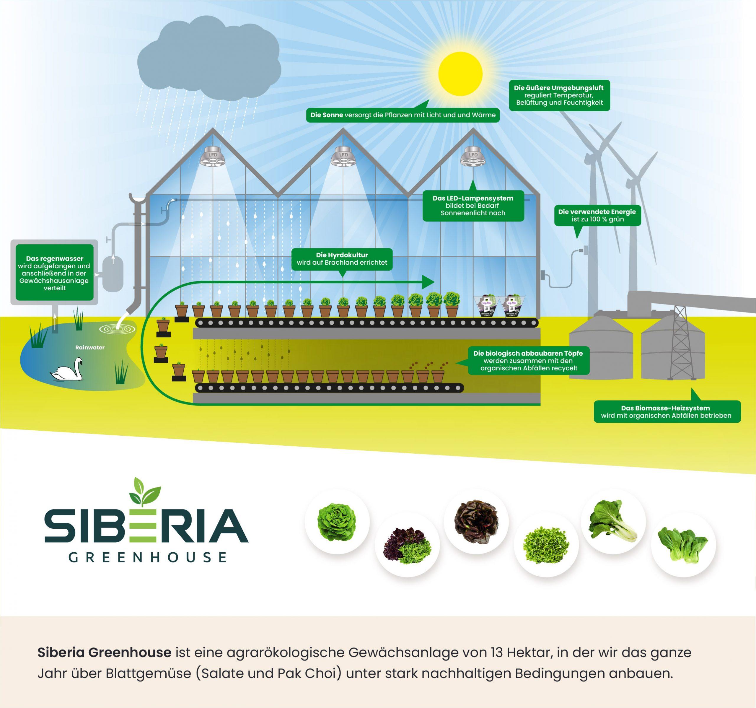 Infographic Siberia